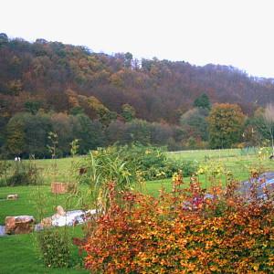 05.jardin automne.