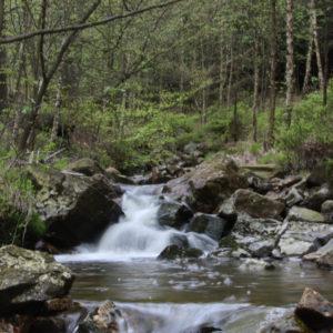 Rivière Hoëgne
